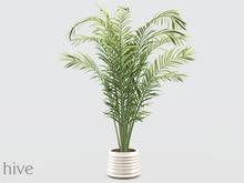 hive // large palm plant