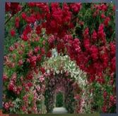 Flowers Tree Path Multi-Colors Wall
