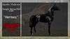 "*RMH* Teegle Horse/Pet coat ""Hermes"" -Boxed"