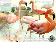 Flamingo, Insel, Wasserfall