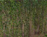 Haning vines pic2