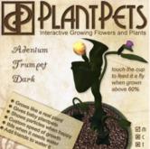 PlantPet Seed [Adenium Trumpet *Dark*]