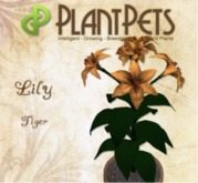 PlantPet Seed [Lily *Tiger*] Updated2019