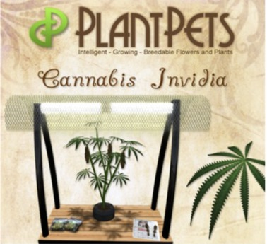 PlantPet Seed [Cannabis *Invidia*] Updated2019