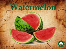 DFS Watermelon 11