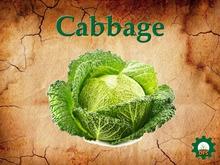 DFS Cabbage Basket 9