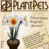 PlantPet Seed [Narcissus *Romance*]