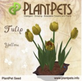 PlantPet Seed [Tulip *Yellow*] Updated2019