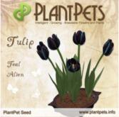 PlantPet Seed [Tulip *Teal Alien*]