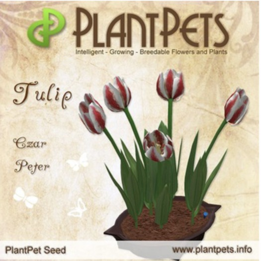 PlantPet Seed [Tulip *Czar Peter*] Updated2019