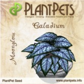 PlantPet Seed [Caladium *Moonglow*] Updated2019