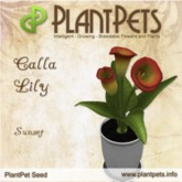 PlantPet Seed [Calla Lily *Sunset*]