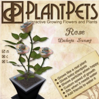 PlantPet Seed [Rose *Dakota Sunset*] Updated2019