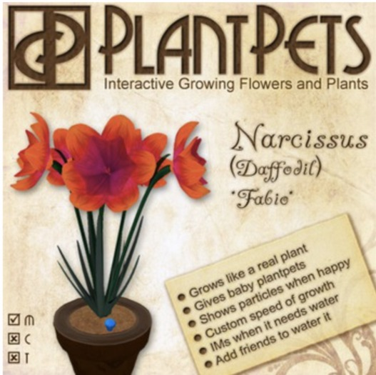 PlantPet Seed [Narcissus *Fabio*] Updated2019