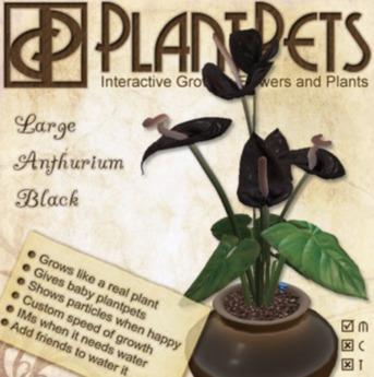 PlantPet Seed [Large Anthurium *Black*] Updated2019