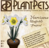 PlantPet Seed [Narcissus *Poeticus*] Updated