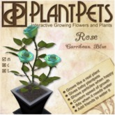 PlantPet Seed [Rose *Carribean Blue*] Updated2019
