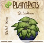 PlantPet Seed [Caladium *Faded Lime*] Updated2019