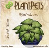 PlantPet Seed [Caladium *Faded Lime*]