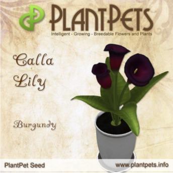 PlantPet Seed [Calla Lily *Burgundy*]