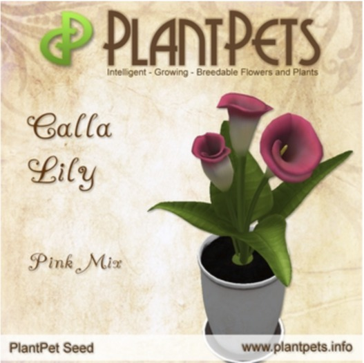 PlantPet Seed [Calla Lily *Pink Mix*] Updated2019