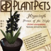 PlantPet Seed [Hyacinth *Prince of the Night*]