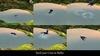 Commoncrow bathe