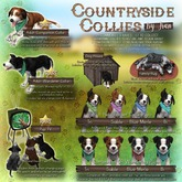 JIAN Countryside Collies :: Held Pup Bi BOX