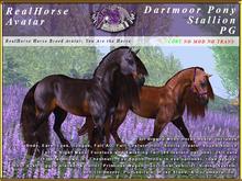 *E* RealHorse Avatar V2 - Dartmoor Stallion PG