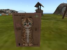 KittyCatS Box - New Born Kitten