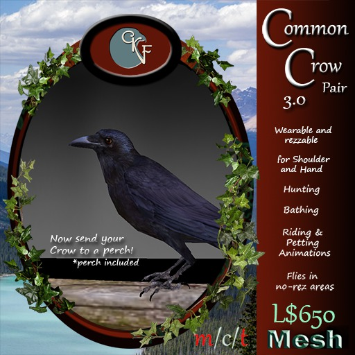 CKit Falconry Common Crow Pair