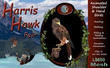 CKit Falconry Harris Hawk Pair