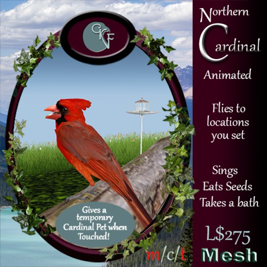 CKit Falconry Male Northern Cardinal