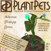 PlantPet Seed [Adenium Trumpet *Green*]