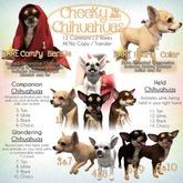 JIAN Cheeky Chihuahuas BOX 13. Black Held
