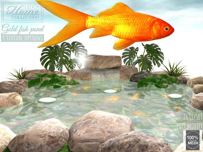 Pond, gold fish