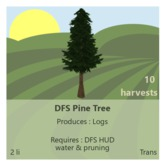DFS Pine Tree