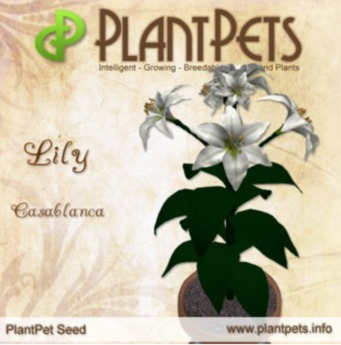 PlantPet Seed [Lily *Casablanca* Updated2019