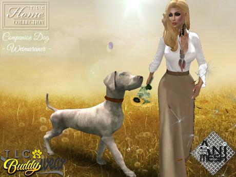 Companion, dog, Weimaraner