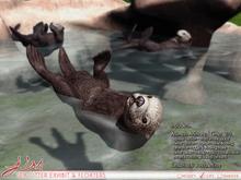 JIAN Sea Otter Exhibit & Floaters