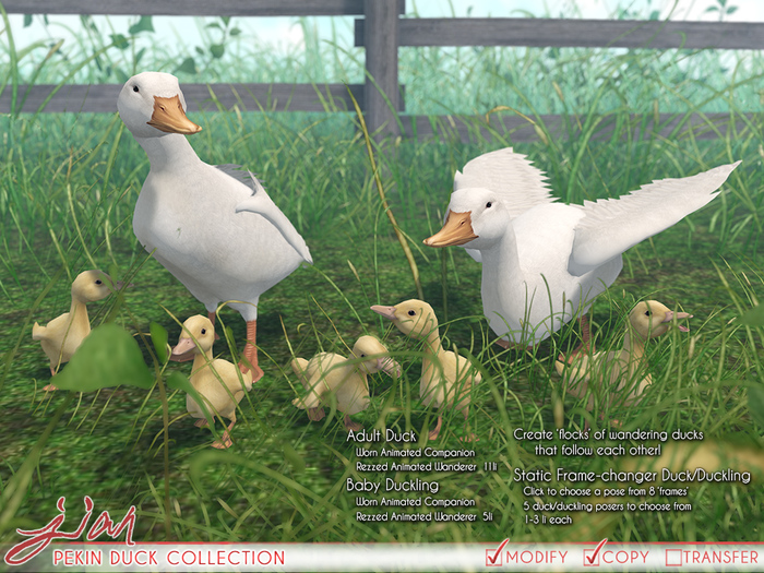 JIAN Pekin Duck Collection