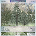 ~ASW~ The First Snow Pine Trees