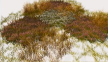 Jad Garden - Autumn grass ground cover heather