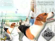 Companion, dog, Parson Russell Terrier