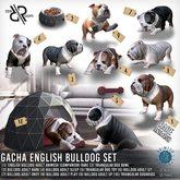 [Rezz Room] Box Dog Bowl Triangular