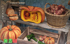 [MF] Mesh autumn fall market stand pumpkins food (boxed)