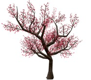 Cherry Blossom Tree - Red