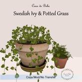 {CdB} Swedish Ivy & Potted Grass