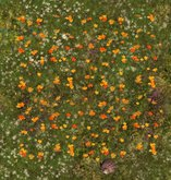 Autumn leaves ground cover fall
