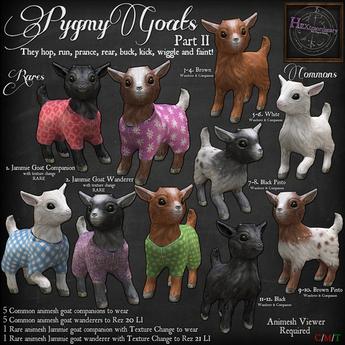 7. *HEXtraordinary* Pygmy Goat Wanderer - Black Pinto